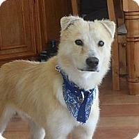 Adopt A Pet :: Buddy Boy - San Diego, CA