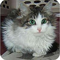 Adopt A Pet :: Minuet - Dallas, TX