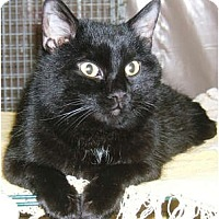 Adopt A Pet :: Beaker - Centerburg, OH