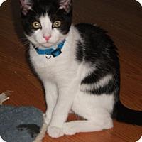 Adopt A Pet :: Shaw - Colmar, PA