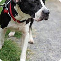 Adopt A Pet :: Mandy - Tinton Falls, NJ
