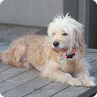 Adopt A Pet :: Cassie - Norwalk, CT