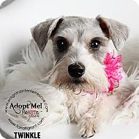 Adopt A Pet :: Twinkle - Omaha, NE