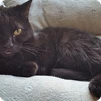 Adopt A Pet :: Extra Tiny - Duluth, GA