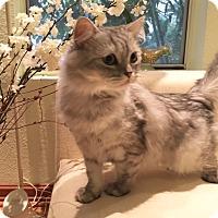 Adopt A Pet :: Carmen - Beverly Hills, CA