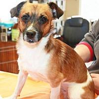 Adopt A Pet :: Bam - Sparta, NJ