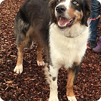 Adopt A Pet :: Wylie - Santa Rosa, CA