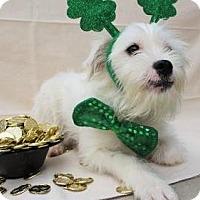 Adopt A Pet :: Waylen - Lincolnton, NC
