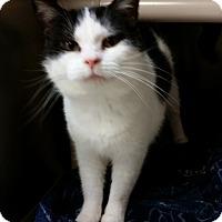 Adopt A Pet :: Dot - Chippewa Falls, WI