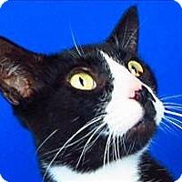 Adopt A Pet :: Chipper - Sherwood, OR