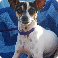 Adopt A Pet :: Phoenix - Rockaway, NJ