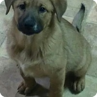 Adopt A Pet :: Faith - House Springs, MO