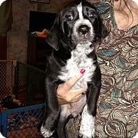 Adopt A Pet :: Jackie - Charlestown, RI