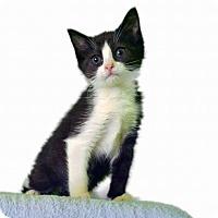Adopt A Pet :: Rock Steady - New Castle, PA