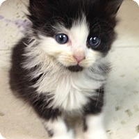 Adopt A Pet :: Tesla - River Edge, NJ