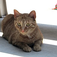 Adopt A Pet :: Georgi - Washingtonville, NY