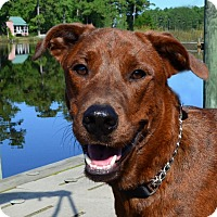 Labrador Retriever/Plott Hound Mix Dog for adoption in Oriental, North Carolina - Ranger New Leash on Life