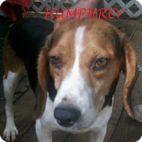 Adopt A Pet :: HUMPHREY - Ventnor City, NJ