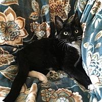 Adopt A Pet :: Jesse - Tampa, FL