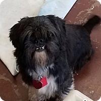 Adopt A Pet :: Barlow - Hurst, TX