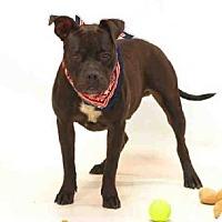Adopt A Pet :: KING - Sanford, FL