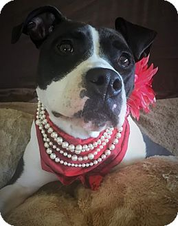 Labrador Retriever/Terrier (Unknown Type, Medium) Mix Dog for adoption in Flint, Michigan - Keisha