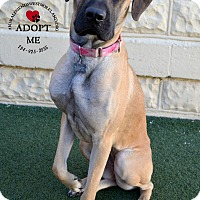 Adopt A Pet :: Jessie - Youngwood, PA