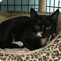 Adopt A Pet :: Leon - Pendleton, NY