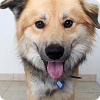 Adopt A Pet :: Tubby D161952 - Edina, MN