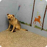 Adopt A Pet :: A499790 - San Bernardino, CA