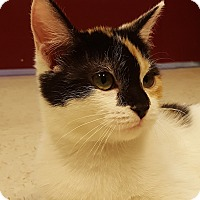 Adopt A Pet :: Alisha - Grayslake, IL