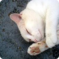 Adopt A Pet :: CASPER the Ghost - Hauntingly Elegant - DeLand, FL