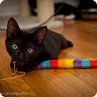Adopt A Pet :: Sassafras - Los Angeles, CA