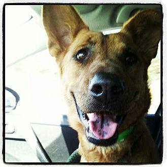 German Shepherd Dog Mix Dog for adoption in Scottsdale, Arizona - Sandy