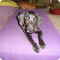 Adopt A Pet :: Sofie - North Jackson, OH