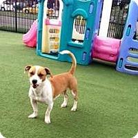Adopt A Pet :: Nikko - Houston, TX
