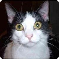 Adopt A Pet :: Luke - Stuarts Draft, VA