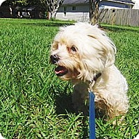 Adopt A Pet :: Bentley - Orange Park, FL