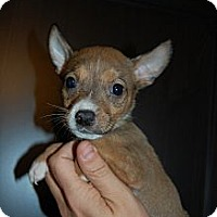 Adopt A Pet :: Peanut - Coral Springs, FL