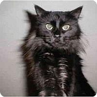 Adopt A Pet :: Gladys - Proctor, MN