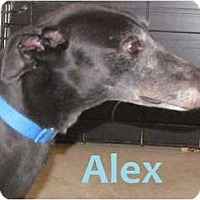 Adopt A Pet :: Alex - Fremont, OH