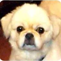 Adopt A Pet :: Sparky-PA - Mays Landing, NJ
