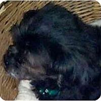 Adopt A Pet :: Remus-PA - Mays Landing, NJ