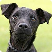 Adopt A Pet :: Twitter - Austin, TX