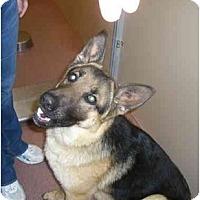 Adopt A Pet :: Weber - Hamilton, MT