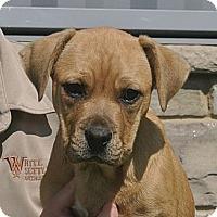 Adopt A Pet :: Hooch - white settlment, TX