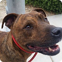 Adopt A Pet :: Jerome - Las Vegas, NV