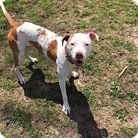 Adopt A Pet :: Elsa - Vernon Hills, IL