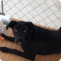 Adopt A Pet :: Kylee - Burlington, NJ