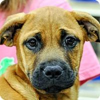 Adopt A Pet :: Addison - Gainesville, FL